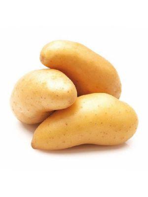 Cartofi Ratte du Touquet